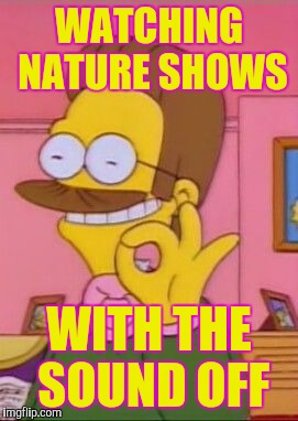 Creationists keeping their blood pressure low by | WATCHING NATURE SHOWS WITH THE SOUND OFF | image tagged in ned flanders,creationism,memes | made w/ Imgflip meme maker