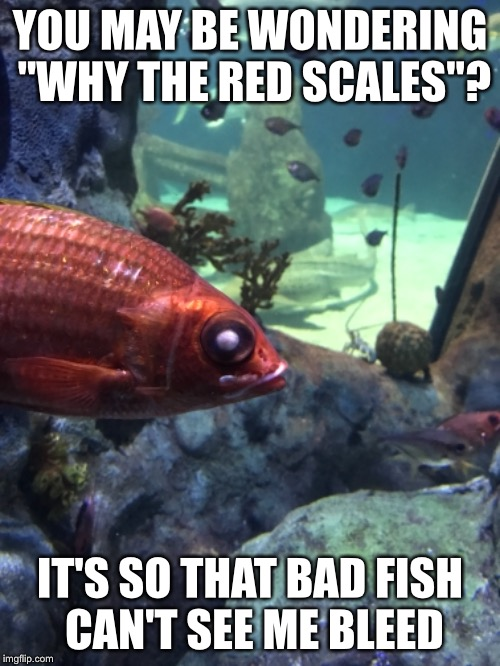 "I was at the aquarium today, and I found this fish that kinda looks like Deadpool! xD | YOU MAY BE WONDERING ""WHY THE RED SCALES""? IT'S SO THAT BAD FISH CAN'T SEE ME BLEED 