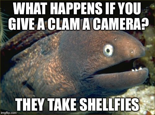 Bad Joke Eel Meme | WHAT HAPPENS IF YOU GIVE A CLAM A CAMERA? THEY TAKE SHELLFIES | image tagged in memes,bad joke eel | made w/ Imgflip meme maker
