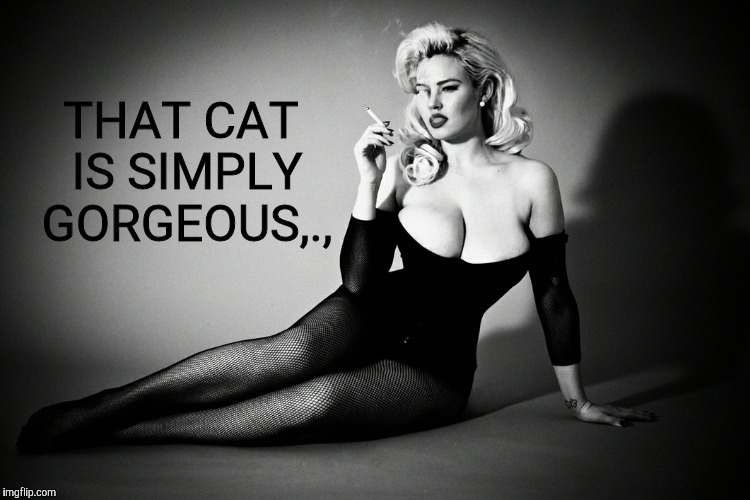 Gia Genevieve, femme fatale noir pinup,,, | THAT CAT IS SIMPLY GORGEOUS,., | image tagged in gia genevieve femme fatale noir pinup   | made w/ Imgflip meme maker