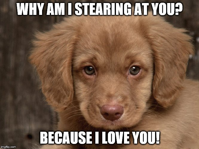 Loving dog | WHY AM I STEARING AT YOU? BECAUSE I LOVE YOU! | image tagged in dog | made w/ Imgflip meme maker