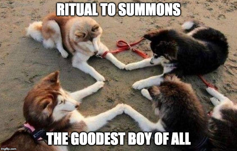 Good boys. | RITUAL TO SUMMONS THE GOODEST BOY OF ALL | image tagged in dog,ritual,iwanttobebacon,iwanttobebaconcom | made w/ Imgflip meme maker