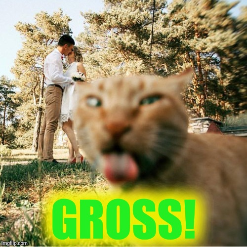 Something is in the air... | GROSS! | image tagged in cats,kissing,gross,love,touching | made w/ Imgflip meme maker