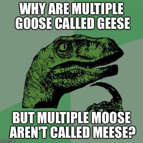 Philosoraptor Meme | WHY ARE MULTIPLE GOOSE CALLED GEESE BUT MULTIPLE MOOSE AREN'T CALLED MEESE? | image tagged in memes,philosoraptor | made w/ Imgflip meme maker