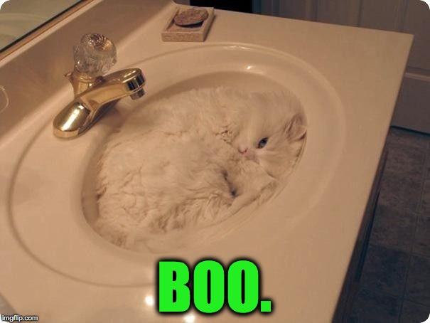 Surprise surprise :-) | BOO. | image tagged in sink kitty | made w/ Imgflip meme maker