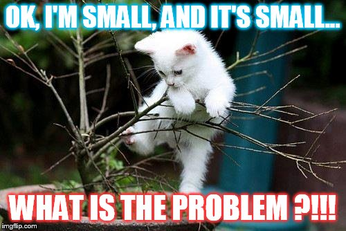 Why Can't I Do This? |  OK, I'M SMALL, AND IT'S SMALL... WHAT IS THE PROBLEM ?!!! | image tagged in memes,funny cat memes,cat memes,why cant i,do,this | made w/ Imgflip meme maker