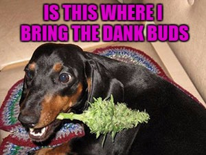 IS THIS WHERE I BRING THE DANK BUDS | made w/ Imgflip meme maker