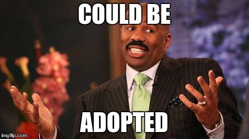 Steve Harvey Meme | COULD BE ADOPTED | image tagged in memes,steve harvey | made w/ Imgflip meme maker