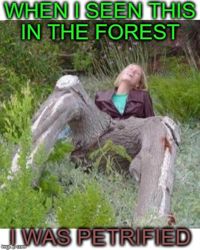 Morning Wood National Forest   | WHEN I SEEN THIS IN THE FOREST I WAS PETRIFIED | image tagged in trees,morning wood,memes,funny,forest world problems | made w/ Imgflip meme maker