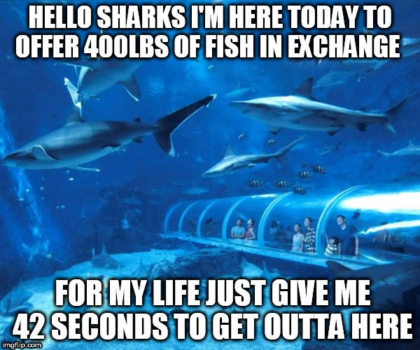 sharktank offer | HELLO SHARKS I'M HERE TODAY TO OFFER 400LBS OF FISH IN EXCHANGE FOR MY LIFE JUST GIVE ME 42 SECONDS TO GET OUTTA HERE | image tagged in sharked,tanked,sharktank,offer | made w/ Imgflip meme maker