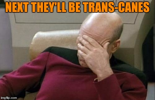 Captain Picard Facepalm Meme | NEXT THEY'LL BE TRANS-CANES | image tagged in memes,captain picard facepalm | made w/ Imgflip meme maker