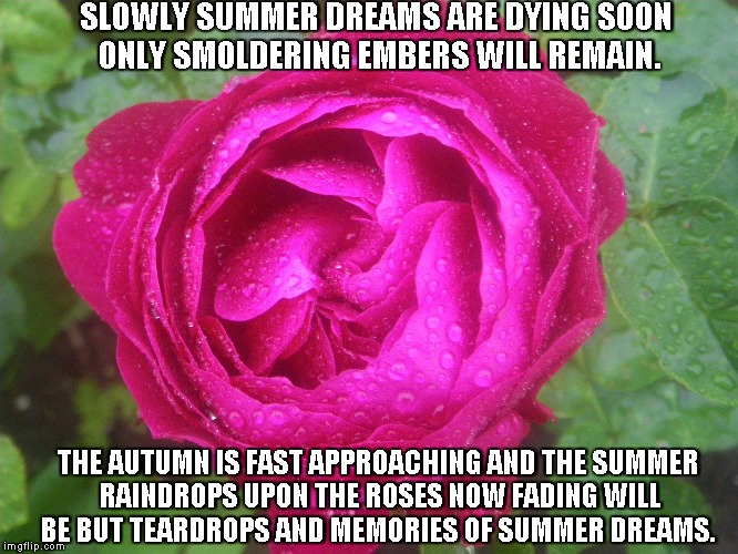 Summer Dreams | SLOWLY SUMMER DREAMS ARE DYING SOON ONLY SMOLDERING EMBERS WILL REMAIN. THE AUTUMN IS FAST APPROACHING AND THE SUMMER RAINDROPS UPON THE ROS | image tagged in summer,summer dreams,autumn,roses,memories,teardrops | made w/ Imgflip meme maker