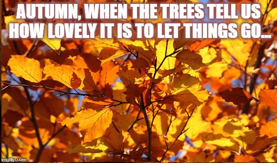 Autumn wisdom | AUTUMN, WHEN THE TREES TELL US HOW LOVELY IT IS TO LET THINGS GO... | image tagged in autumn,seasons,seasonal quotes | made w/ Imgflip meme maker