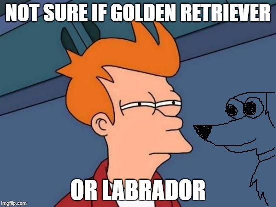 Futurama Fry Meme | NOT SURE IF GOLDEN RETRIEVER OR LABRADOR | image tagged in memes,futurama fry | made w/ Imgflip meme maker