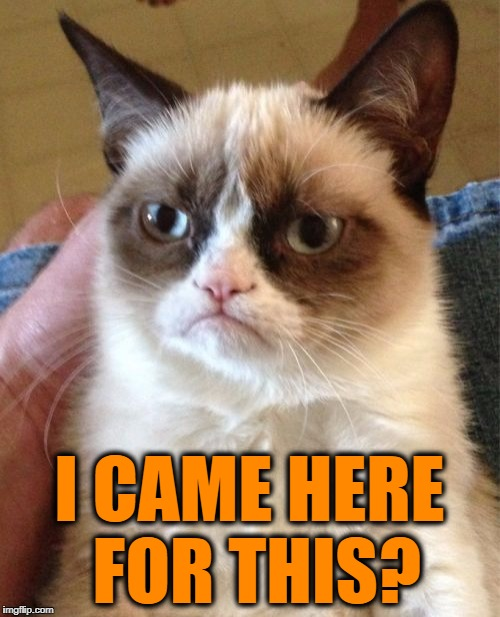 Grumpy Cat Meme | I CAME HERE FOR THIS? | image tagged in memes,grumpy cat | made w/ Imgflip meme maker