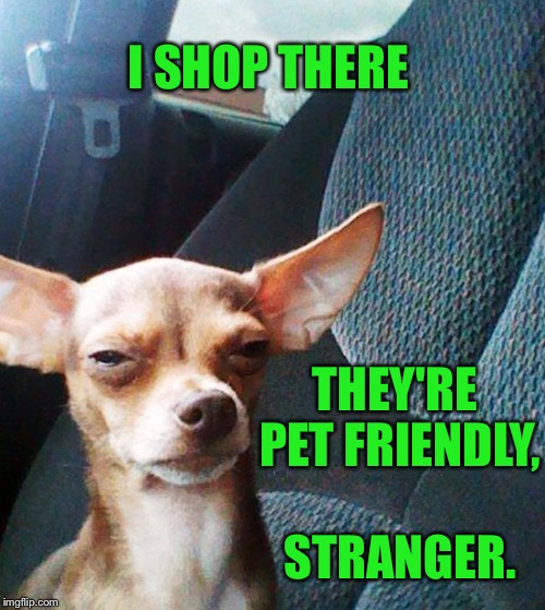 Stoner dog | I SHOP THERE THEY'RE PET FRIENDLY, STRANGER. | image tagged in stoner dog | made w/ Imgflip meme maker