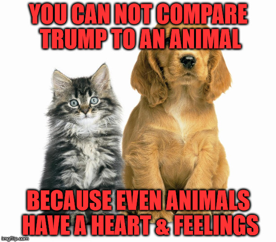 YOU CAN NOT COMPARE TRUMP TO AN ANIMAL BECAUSE EVEN ANIMALS HAVE A HEART & FEELINGS | image tagged in mother's day  pets animals cats dogs adoption | made w/ Imgflip meme maker