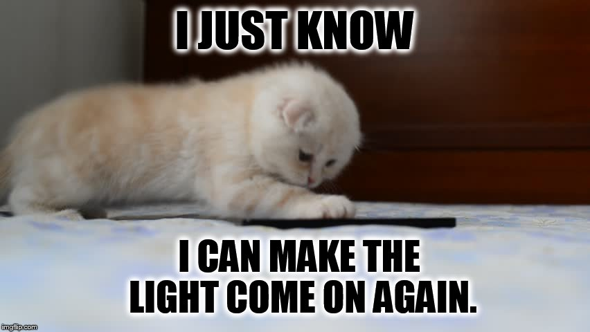 Keeps Trying | I JUST KNOW I CAN MAKE THE LIGHT COME ON AGAIN. | image tagged in memes,cat memes,cat,playing,cell phone | made w/ Imgflip meme maker