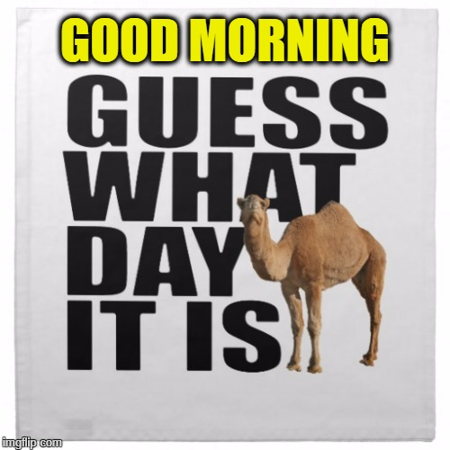 GOOD MORNING | image tagged in camel guess | made w/ Imgflip meme maker