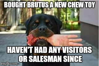 Go away | BOUGHT BRUTUS A NEW CHEW TOY HAVEN'T HAD ANY VISITORS OR SALESMAN SINCE | image tagged in memes,dog,funny meme,salesman | made w/ Imgflip meme maker