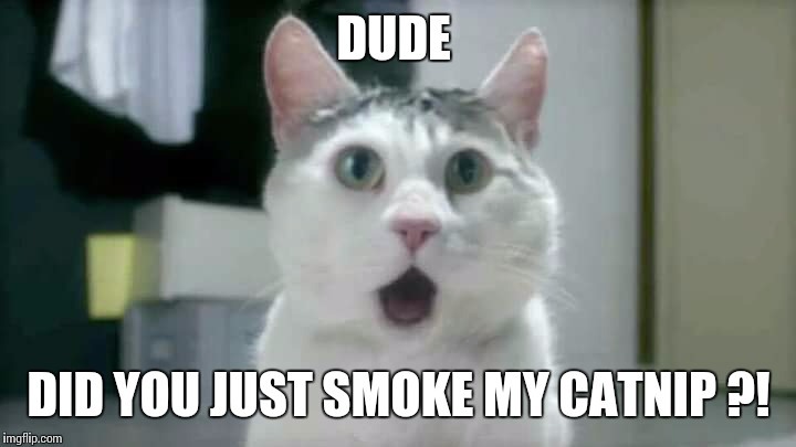 420 kitty | DUDE DID YOU JUST SMOKE MY CATNIP ?! | image tagged in cat,memes,420,weed | made w/ Imgflip meme maker