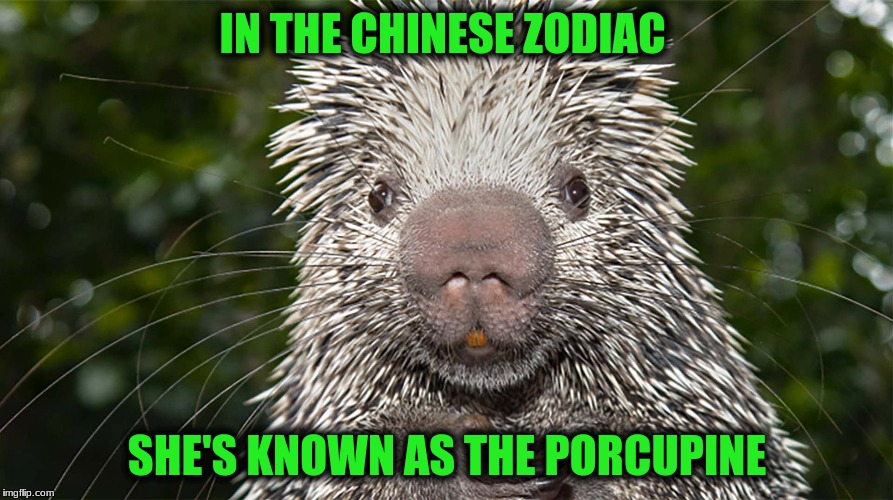 IN THE CHINESE ZODIAC SHE'S KNOWN AS THE PORCUPINE | made w/ Imgflip meme maker