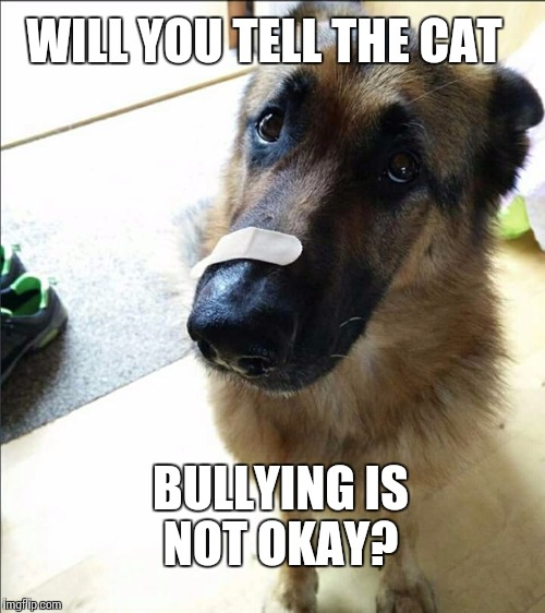Say no to bullying | WILL YOU TELL THE CAT BULLYING IS NOT OKAY? | image tagged in bullying,cat,grumpy cat,dog,memes | made w/ Imgflip meme maker