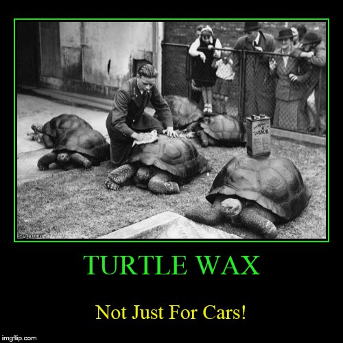 I Learn Something New Everyday! | TURTLE WAX | Not Just For Cars! | image tagged in funny,demotivationals,turtle wax,turtles,cars,wax | made w/ Imgflip demotivational maker