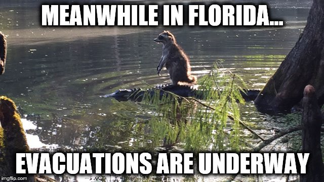 Meanwhile In Florida | MEANWHILE IN FLORIDA... EVACUATIONS ARE UNDERWAY | image tagged in meanwhile in florida,evacuation,hurricane,storm,florida,irma | made w/ Imgflip meme maker