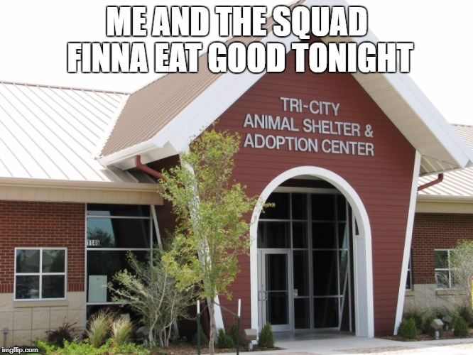 ME AND THE SQUAD FINNA EAT GOOD TONIGHT | image tagged in dogs,cats,funny animals | made w/ Imgflip meme maker