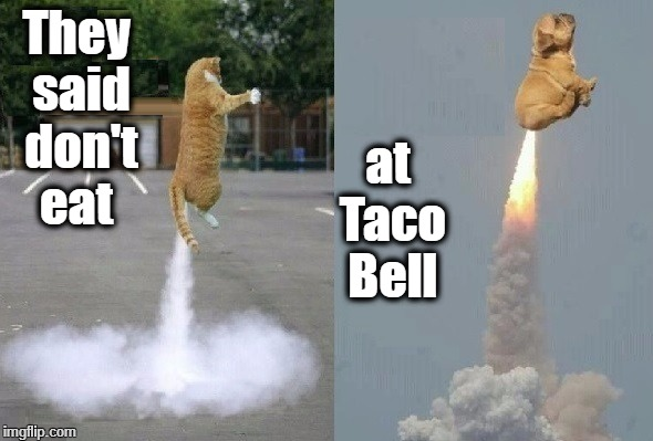 Taco Bell Cats | They said don't eat at Taco Bell | image tagged in funny cats | made w/ Imgflip meme maker