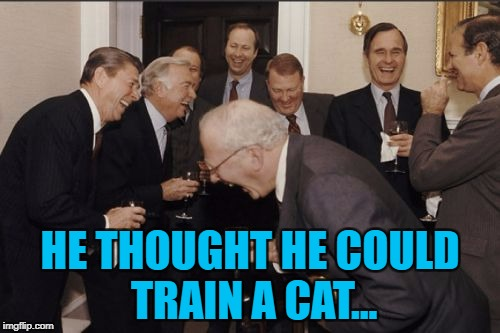 Maybe one day somebody will... :) | HE THOUGHT HE COULD TRAIN A CAT... | image tagged in memes,laughing men in suits,cats,animals,pets | made w/ Imgflip meme maker