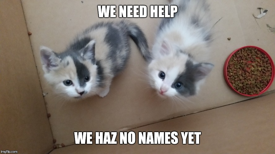 Name my Kittehs contest | WE NEED HELP WE HAZ NO NAMES YET | image tagged in memes,cats | made w/ Imgflip meme maker