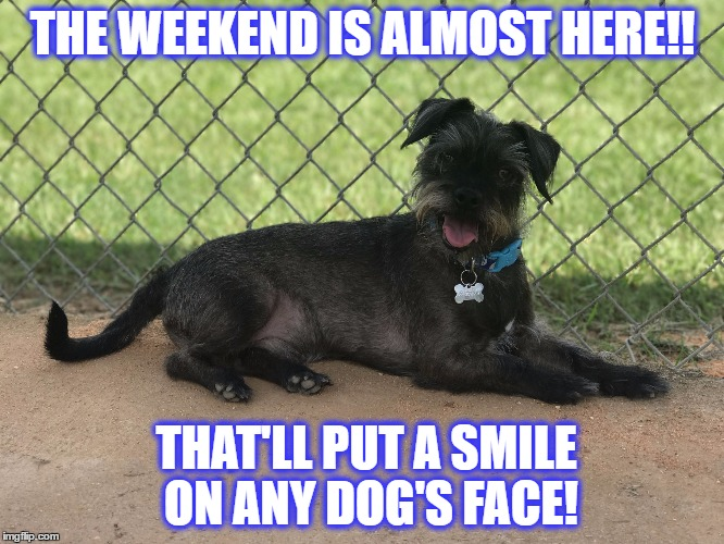 Weekend is coming! | THE WEEKEND IS ALMOST HERE!! THAT'LL PUT A SMILE ON ANY DOG'S FACE! | image tagged in resting,weekend,happy dog,dog,puppy,rudy | made w/ Imgflip meme maker