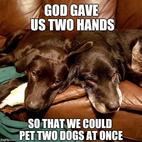 These are my two dogs, Shamrock (15 YO), and his puppy, Clover (5 months old). Best dogs ever! I love them with all my heart <3 | GOD GAVE US TWO HANDS SO THAT WE COULD PET TWO DOGS AT ONCE | image tagged in dogs,jbmemegeek,pets,dog memes,inspirational quote | made w/ Imgflip meme maker