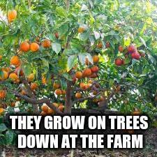THEY GROW ON TREES DOWN AT THE FARM | made w/ Imgflip meme maker
