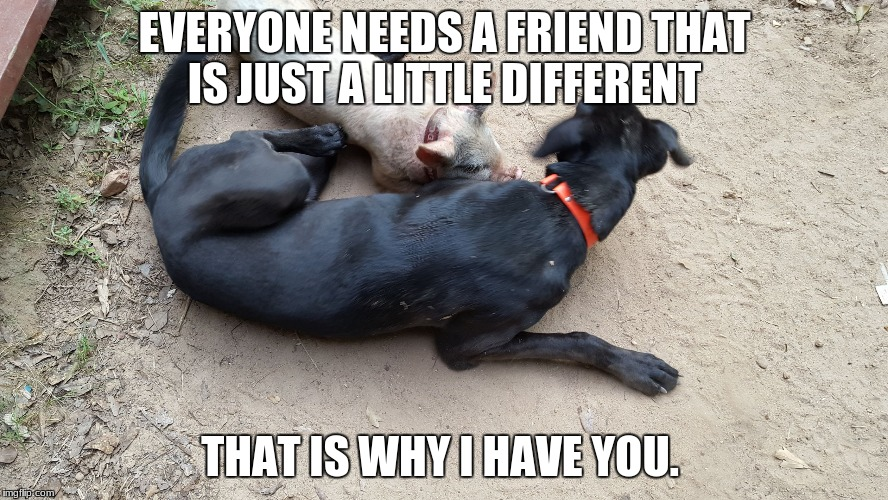 EVERYONE NEEDS A FRIEND THAT IS JUST A LITTLE DIFFERENT THAT IS WHY I HAVE YOU. | image tagged in dog and pig | made w/ Imgflip meme maker