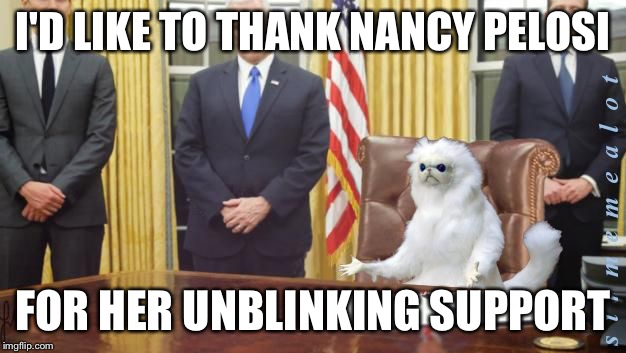 I'D LIKE TO THANK NANCY PELOSI FOR HER UNBLINKING SUPPORT | image tagged in guardian cat in oval office,memes | made w/ Imgflip meme maker