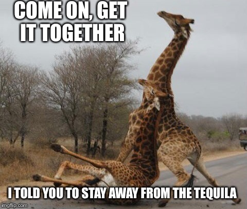 Drunken giraffe | COME ON, GET IT TOGETHER I TOLD YOU TO STAY AWAY FROM THE TEQUILA | image tagged in funny giraffe,drunk | made w/ Imgflip meme maker