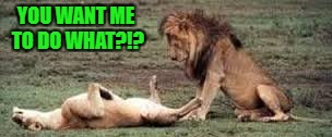 I thought lions would eat anything... | YOU WANT ME TO DO WHAT?!? | image tagged in lion,memes,animals,cats,funny,funny animals | made w/ Imgflip meme maker