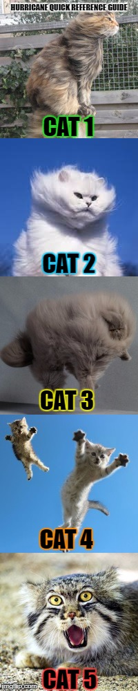 Hurricane Quick Reference Guide | HURRICANE QUICK REFERENCE GUIDE CAT 1 CAT 2 CAT 3 CAT 4 CAT 5 | image tagged in hurricane,category,cat,repost | made w/ Imgflip meme maker