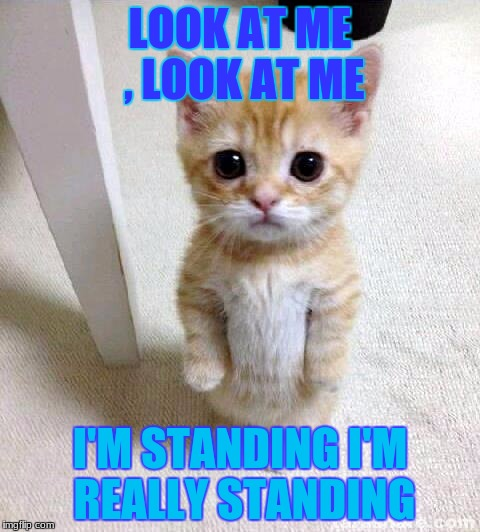 Cute Cat Meme | LOOK AT ME , LOOK AT ME I'M STANDING I'M REALLY STANDING | image tagged in memes,cute cat | made w/ Imgflip meme maker
