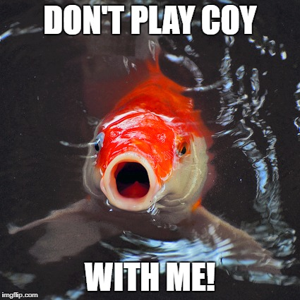 McKoi Fish | DON'T PLAY COY WITH ME! | image tagged in koi,coy,fish,gasp,mccoy | made w/ Imgflip meme maker