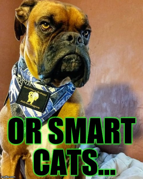 Grumpy Dog | OR SMART CATS... | image tagged in grumpy dog | made w/ Imgflip meme maker