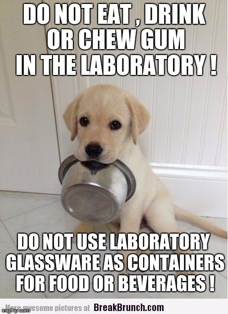 DO NOT EAT , DRINK OR CHEW GUM IN THE LABORATORY ! DO NOT USE LABORATORY GLASSWARE AS CONTAINERS FOR FOOD OR BEVERAGES ! | image tagged in food | made w/ Imgflip meme maker