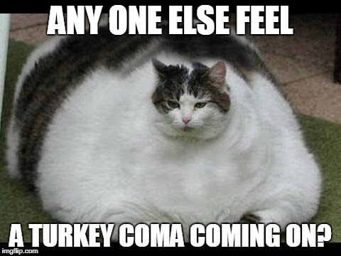 Fat Cat | ANY ONE ELSE FEEL A TURKEY COMA COMING ON? | image tagged in fat cat | made w/ Imgflip meme maker