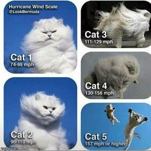 Hurricane Harvey Cat Video