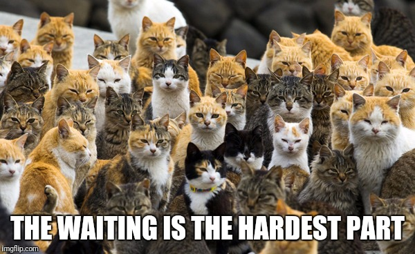 Aoshima cat island | THE WAITING IS THE HARDEST PART | image tagged in aoshima cat island | made w/ Imgflip meme maker