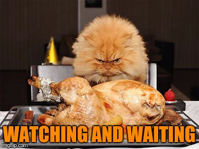 Cat looking at chicken | WATCHING AND WAITING | image tagged in cat looking at chicken | made w/ Imgflip meme maker