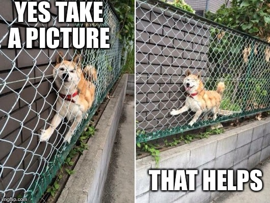 Wo-owie | YES TAKE A PICTURE THAT HELPS | image tagged in doge stuck on fence,doge,fence,stuck | made w/ Imgflip meme maker